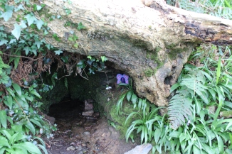 Ireland: we stumbled across a faerie hollow